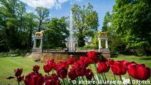Tulpen blühen am 29.04.2014 im Park von Schloss Glienicke im Südwesten von Berlin. Foto: Hauke-Christian Dittrich/dpa +++(c) dpa - Bildfunk+++ (c) picture-alliance/dpa/H. Dittrich