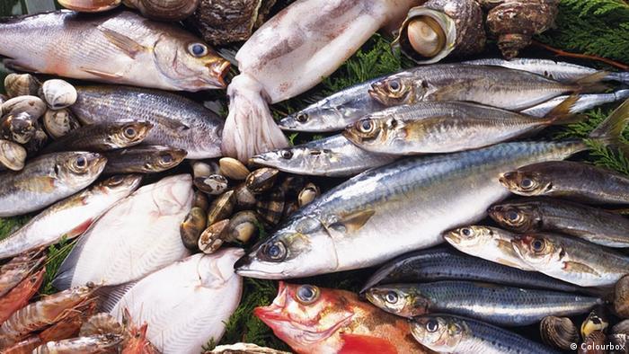 Meeresfrüchte und Fische