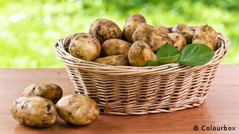 H πατάτα φαίνεται να καλλιεργείται ακόμη καλύτερα κάτω από τις ηλιακές εγκαταστάσεις