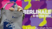 Ein Plüsch-Teddy steckt am 28.01.2014 in Berlin vor Beginn einer Pressekonferenz in der offiziellen Berlinale-Tasche. Die 64. Berlinale findet vom 06.02. bis 16.02.2014 statt. Foto: Soeren Stache/dpa +++(c) dpa - Bildfunk+++ Copyright: picture-alliance/dpa/S. Stache