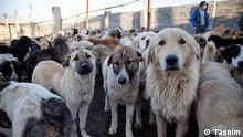 Iran Tierschutzorganisation Zagros animals shelter