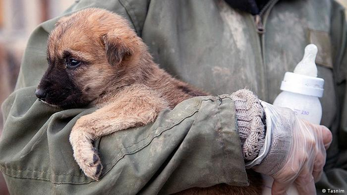 Iran Tierschutzorganisation Zagros animals shelter