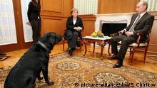 Putins Labrador Koni