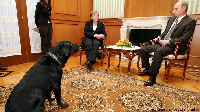 Лабрадор президента РФ на протокольной съемке встречи Путина и Меркель в 2007 году