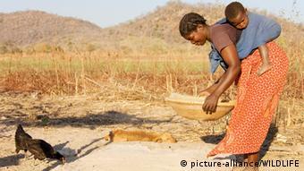A woman sieves grain