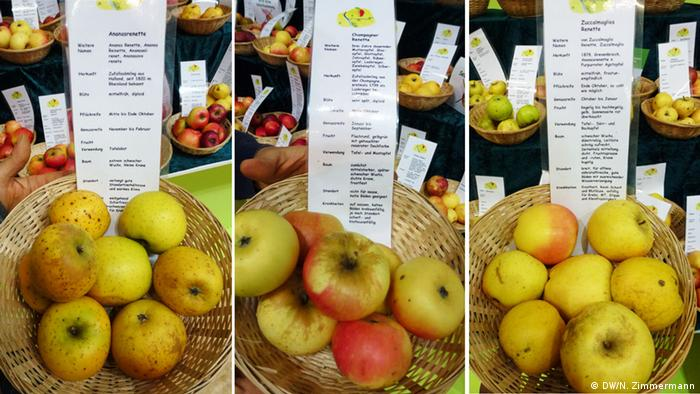 Heirloom apple varieties on display at Green Week (Photo: DW/N. Zimmermann)
