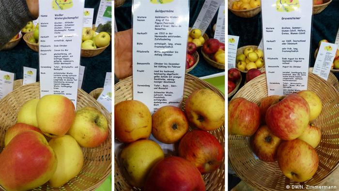 Three heirloom apple varieties from Germany on display at Green Week (Photo: DW/N. Zimmermann)