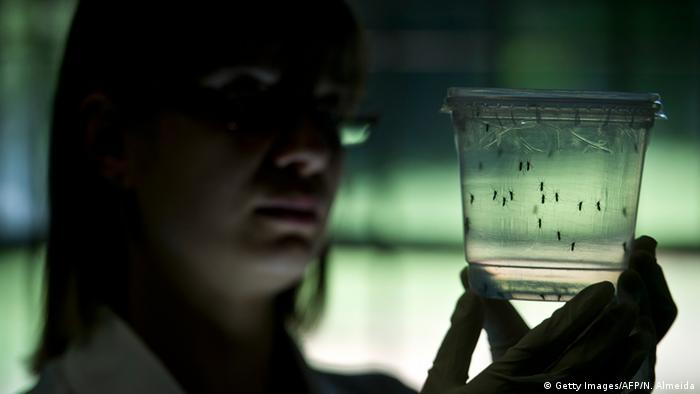 Aedes aegypti mosquitos are seen in containers at a lab. (Photo: NELSON ALMEIDA/AFP/Getty Images)
