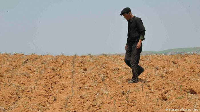 Drought in North Korea (picture alliance / dpa)