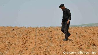 Η παρατεταμένη ξηρασία μεταβάλλει πολλές από τις βιολογικές λειτουργίες των φυτών, όπως την επεξεργασία χημικών ουσιών