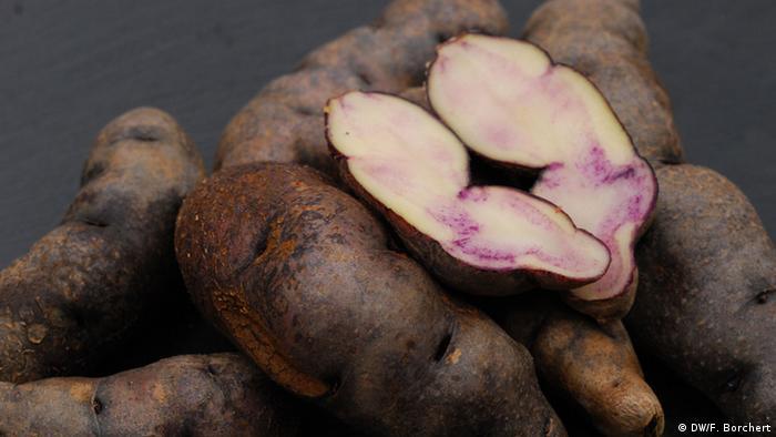 Sorta krumpira bamberški roščić