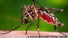This 2006 photo provided by the Centers for Disease Control and Prevention shows a female Aedes aegypti mosquito in the process of acquiring a blood meal from a human host. On Friday, Jan. 15, 2016, U.S. health officials are telling pregnant women to avoid travel to Latin America and Caribbean countries with outbreaks of a tropical illness linked to birth defects. The Zika virus is spread through mosquito bites from Aedes aegypti and causes only a mild illness in most people. But there¿s been mounting evidence linking the virus to a surge of a rare birth defect in Brazil. (James Gathany/Centers for Disease Control and Prevention via AP) Copyright: picture-alliance/AP Photo/J. Gathany