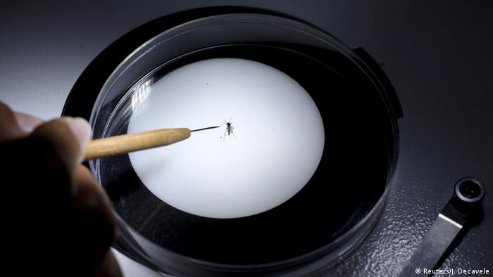 A researcher examining a mosquito through a magnifiying glass. (Photo: REUTERS/Josue Decavele)