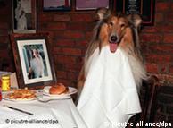 Для собак есть специальные рестораны, для курильщиков - нет