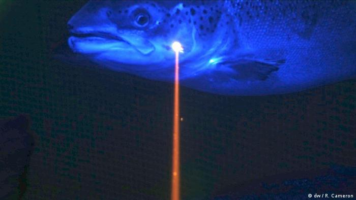 A fish being hit by a laser. (Photo: dw / R. Cameron)