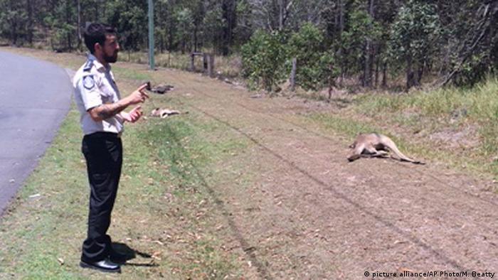 Kangeroo carcasses were strewn across a 100-meter stretch of road
