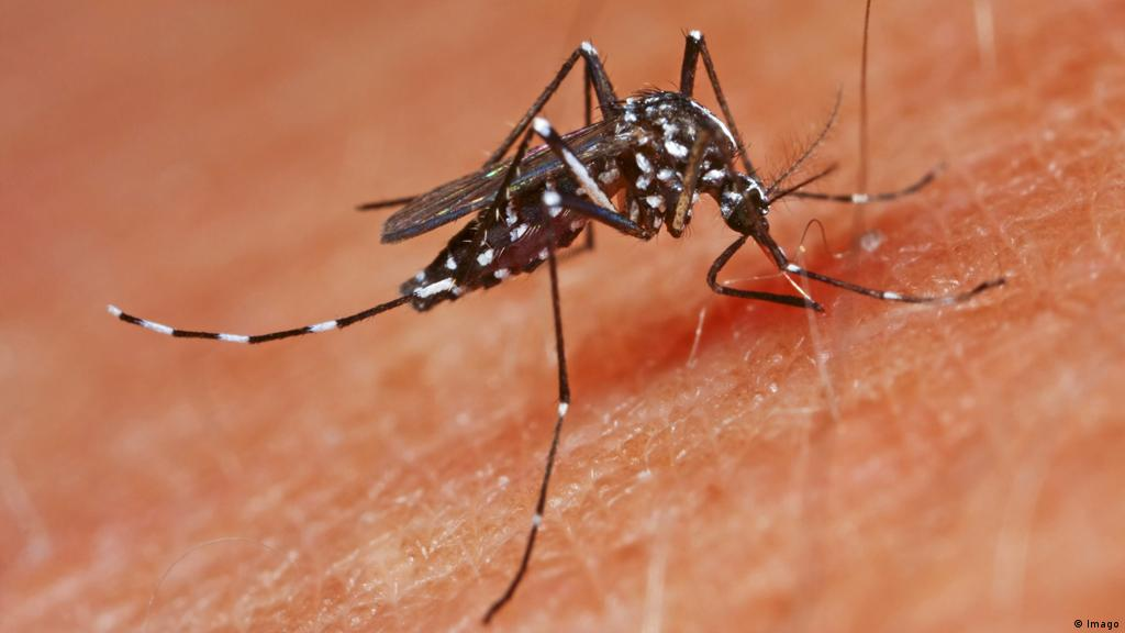 How To Protect Yourself From Asian Tiger And Bush Mosquitoes Science In Depth Reporting On Science And Technology Dw 19 08 2020