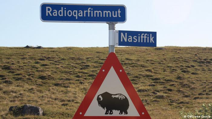 A sign showing muskoxen
