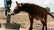 Simbabwe Esel sucht Wasser