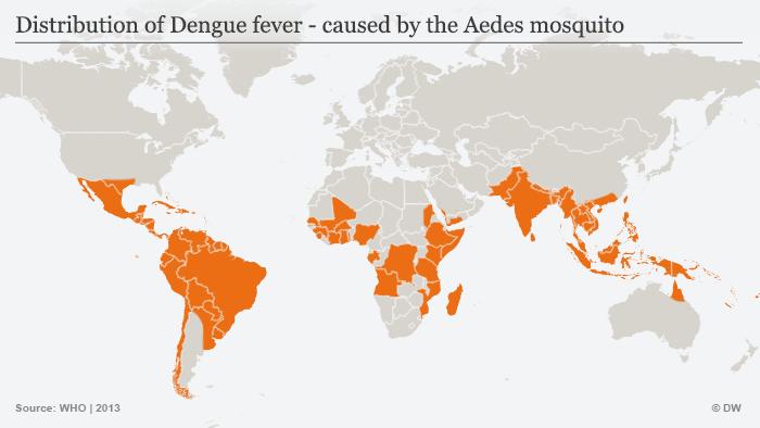 Infografik Aedes-Mücke Verbreitung Dengue-Fieber Englisch