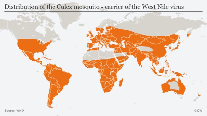 Infografik Culex-Mücke Verbreitung Englisch