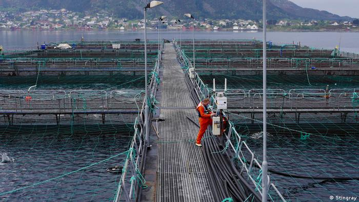 Fish farm in Norway. (Photo: Stingray)