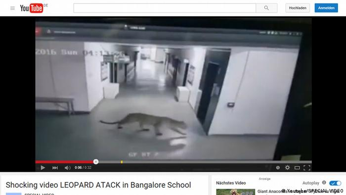 Screenshot Youtube Indien Leopard in Schule