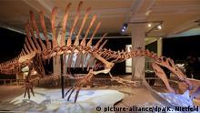Skelett des Spinosaurus