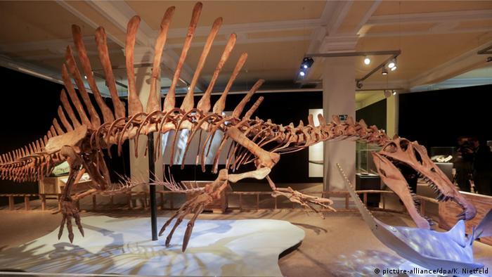 Deutschland Sonderausstellung Spinosaurus