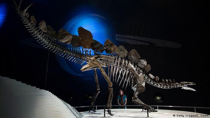 England Sonderausstellung Stegosaurus