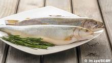 Fisch auf dem Teller Symbolbild