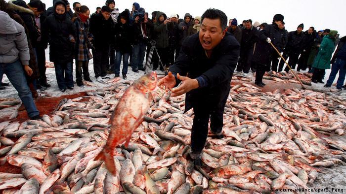 چین به صید بیرویه و ناپایدار خود ادامه میدهد