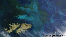 When the Moderate Resolution Imaging Spectroradiometer (MODIS) on NASA's Terra satellite captured this image on December 2, 2015, the waters northeast of the Falkland Islands were awash with color.