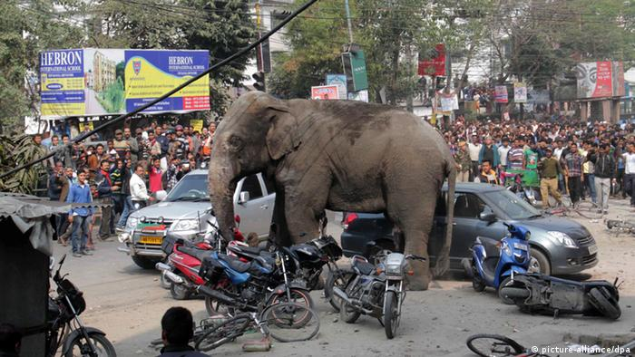 A wild elephant tramples cars and motorbikes in the northeast Indian city of Siliguri.