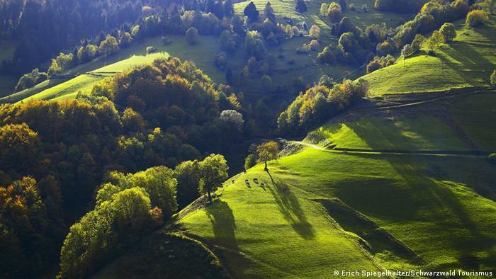 Deutschland Schwarzwald Hügellandschaft