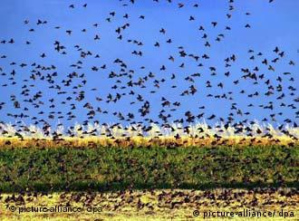 বাংলাদেশে জলাধারগুলোয় পরিযায়ী পাখি (ফাইল ফটো)