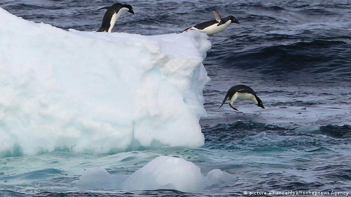 Penguins jump into the water