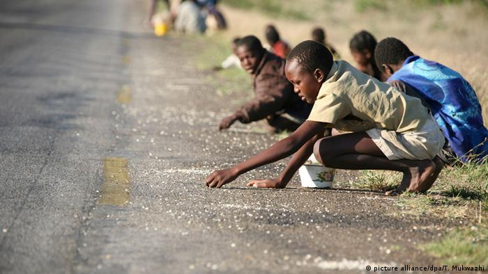 Children kneeling by the side of a road, picking up tiny pieces of corn.