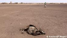 A man walks near a carcass of a dead cow in Farado Kebele, one of drought stricken Somali region in Ethiopia, January 26, 2016. The drought relief effort in Ethiopia needs about $500 million to fund programmes beyond the end of April to support 10.2 million people facing critical food shortages this year, the U.N. World Food Programme said on Thursday. Picture taken January 26, 2016. REUTERS/Tiksa Negeri Reuters/T.Negeri