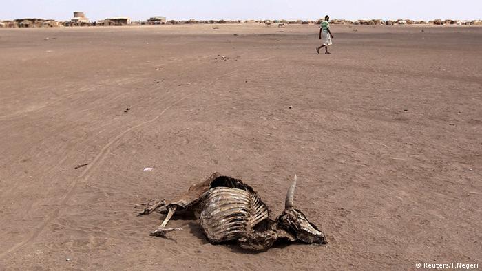Kadaver eines toten Tieres in der Somali-Region in Äthiopien