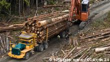 Logging in British Columbia, Canada