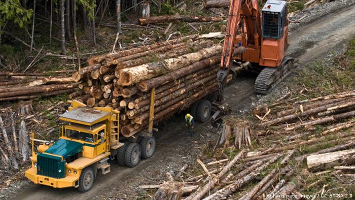 Logging in British Columbia, Canada (hans peter meyer / CC BY-SA 2.0)