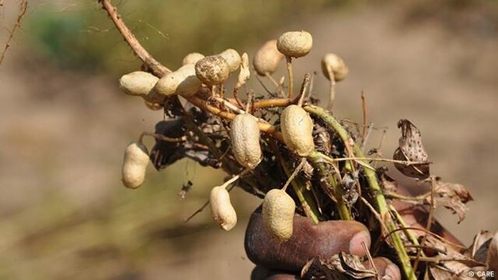 Zerstörte Erdnüsse, Copyright: CARE