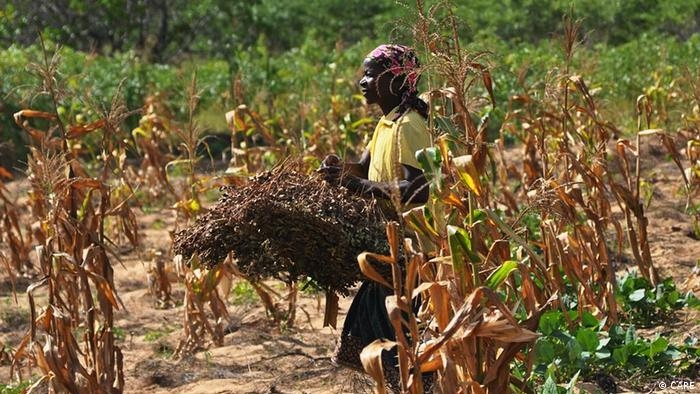 A woman in a field amid a failed peanut harvest in Inhambane, Mosambique