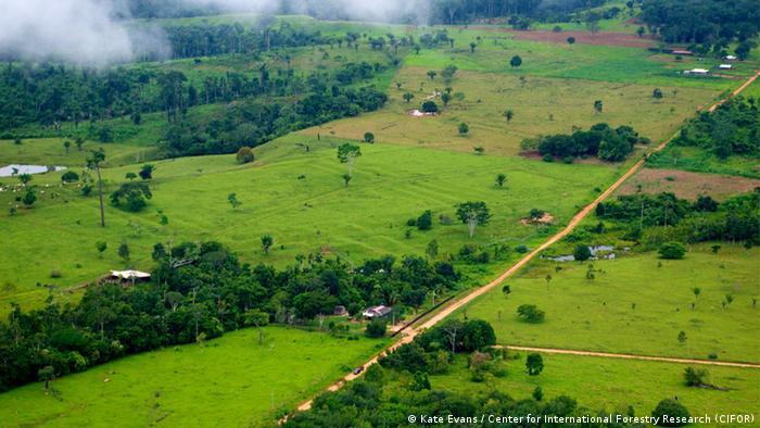 Deforestation, Brazil (Kate Evans / Center for International Forestry Research (CIFOR))