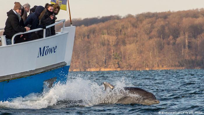 Дельфины в гавани Фленсбурга
