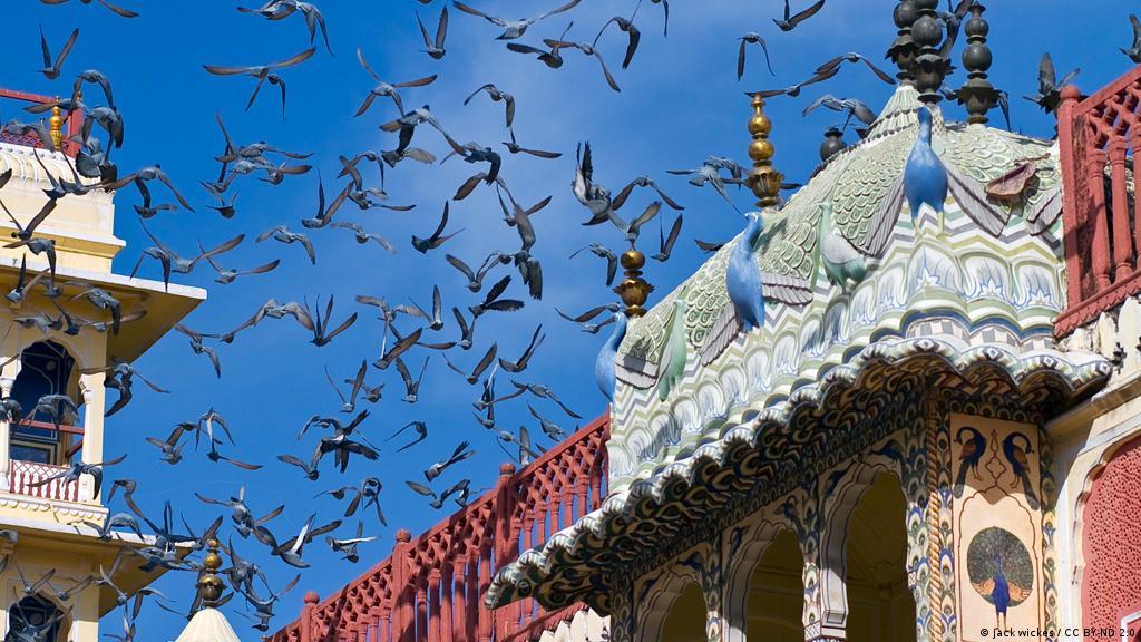 Un Hospital En Delhi Ayuda A Los Pájaros A Volar Más Alto Proteccion Del Medioambiente Dw 01 03 2016
