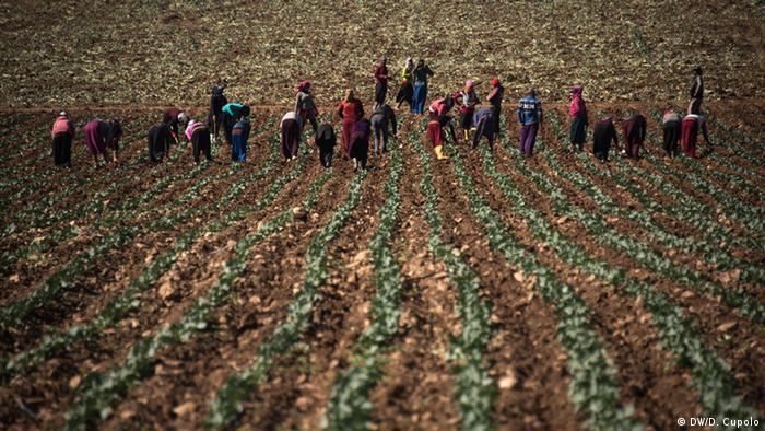 Farm workers on a field in Torbali