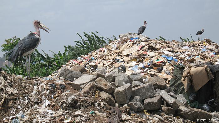 Vultures perch on a rubbish dump (Photo: Josephat Charo / DW)