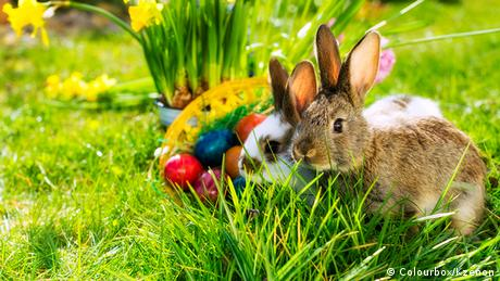 An Easter rabbit near decorated eggs